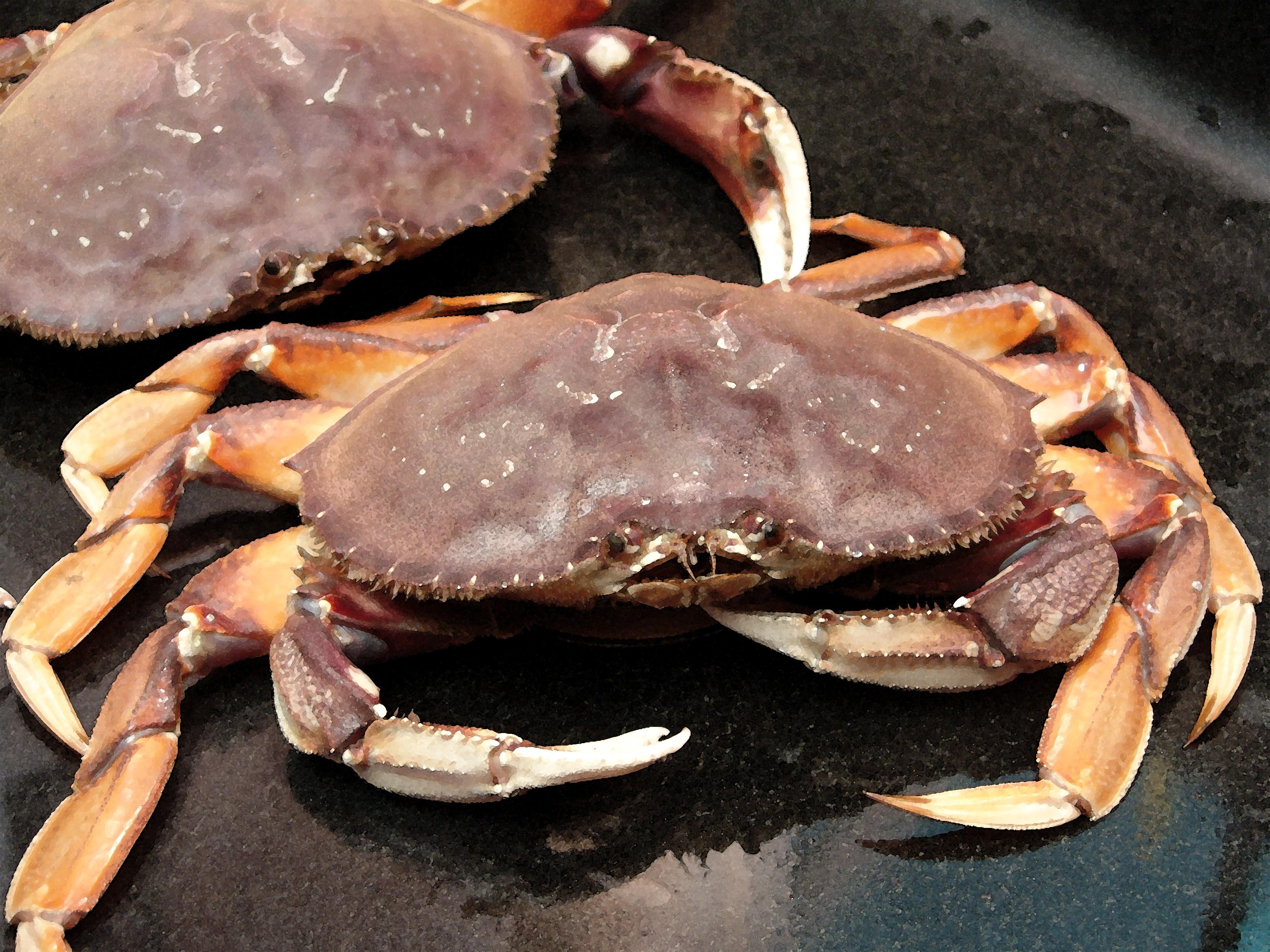 Marinated Cracked Dungeness Crab 5starsinyourkitchens Blog